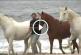 Csodálatos dolog történt, miután a férfi kivitte a lovakat a tengerpatra! – Videó