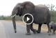 Elámulsz mit tett az anyaelefánt, miután kicsinye túl közel ment az emberekhez! – Videó