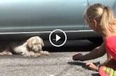 7 évig élt a parkolóban a kutyus, de most végre jó helyre került! Elképesztően megható! – Videó