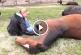Ezt a csodálatos lovas kisfilm egy teljesen más világba repít el minket! – Videó