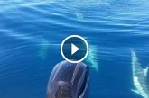 A férfi mit sem sejtve horgászott, amikor csodás dolog történt4 – Videó