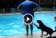 Nézd meg, hogyan tréfálja meg ez a vicces kedvű kutyus az embereket! – Videó