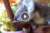 Mosolyt csal az arcodra, ahogy az Ausztrál vadaspark lakói örülnek a húsvéti finomságoknak! – Videó