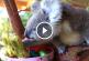 Az ausztrál vadasparkba is megérkezett a húsvéti nyuszi – Ennél aranyosabbat ma nem fogsz látni!