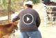 El sem hinnéd, mi történt miután a tehén újra találkozott borjával! – Videó