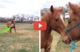 Egy ló szénával a szájában fut a mezőn, amikor kiderül miért csinálja ezt teljesen elképedsz! – Videó