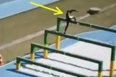 Elképesztő akadálypálya verseny – Nézd, hogy ugranak le több méter magasból!