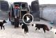 Ilyen okos kutyákat még nem láttál! – Videó