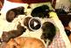 Ezért érdemes örökbe fogadnod egy idős kutyát – Imádnivaló kisfilm