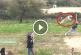 Nézd meg a saját szemeddel, mekkorát repül a világ legnagyobbat ugró kutyája! – Videó