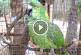 Ezt a papagájt 10 perc után kiraknád az udvarra!