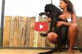 A fekete párduc ráveti magát a lányra, ami ez után történt attól leesik az állad! – Videó
