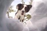 Eszméletlen, ez a kutya 20 ember munkáját végzi el 5 perc alatt! – Videó