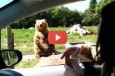 Ezek a cuki medvék vidámságot csalnak a szürke hétköznapokba! – Videó