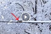 A kis mókus eszméletlen édes, ahogy eltakarítja a megszokott útból a havat! – Videó