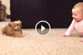 Hihetetlenül édes, ahogy ez a kisbaba és a kiskutyája játszanak! – Videó