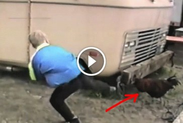Fetrengeni fogsz a nevetéstől, ha megnézed, hogyan karatézza le a kissrác a kakast! – Videó
