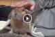 Nézd meg mennyire édesen kéri a nyuszi a gazdáját, hogy simogass! – Videó