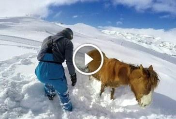 Megható, ahogy ez a férfi segít a hóba rekedt állaton! – Videó