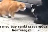 Ilyen durván macskák még nem szakítottak! Fetrengeni fogsz a nevetéstől! – Videó