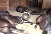 Furcsa zajt hallott az istállóból, amikor benézett, teljesen elámult! – Videó