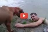 Hihetetlen, mit tett a kutyus, mikor azt hitte, a gazdája fuldoklik! – Videó