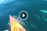 A nyílt vízen evező férfinek elképesztő élményben volt része! – Videó