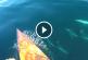 A nyílt vízen evezett a férfi, amikor váratlan látogatói akadtak – Ritka felvétel!