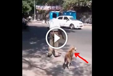 A rendőr mellet áll egy kutya – Nem fogod elhinni mi történik a következő pillanatban!