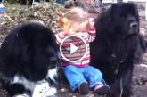 Nézd milyen jól bánik a gyerekekkel a világ legnyugodtabb kutyusa! – Videó