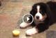 Ilyen édesen játszadozik az ismeretlen gyümölccsel a pár hetes kutyus! – Videó