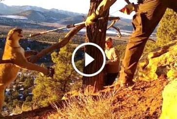 Elképesztő módon, életüket kockáztatva mentették meg a csapdába esett pumát! – Videó