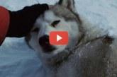 Elő a zsepikkel, ilyen megható kisfilmet még nem láttál az igazi barátságról! – Videó