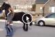 Gazdájával sétál a csodaszép fríz ló – De mikor meglátod hogyan, Te is elámulsz!