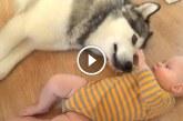 Nézd, milyen édesen játszik ez a kisbaba husky barátjával! – Videó