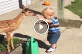 Ezt látnod kell! Imádnivaló barátság született a kisfiú és az őzgida között! – Videó