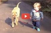 Garantáltan jobb kedved lesz, ha megnézed, milyen huncutságot csinál ez a kisfiú és a kutyája!