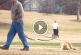 Kutyus nem akarja elhagyni a parkot – Ez nagyon muris!