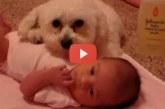 Hihetetlen cuki, ahogy a kutyus védelmezi a kisbabát! – Videó