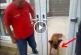 Ezt a kutyust nagyon átverték, garantált a nevetés! – Videó