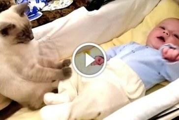 Azt mondta a cicának, hogy vigyázzon a babára – Nézd mi történt!