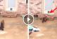Bejárót készített a cicájának, de nézd mi a macska reakciója amikor meglátja! – Ez hatalmas!