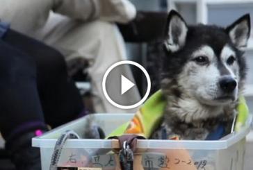 Látnod kell, mit csinál ez a szerető gazdi az idős kutyájával!