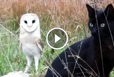 Macska legjobb barátja egy bagoly – Ha nem látom, nem hiszem el!