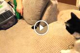 Cica furcsa hangot hall a dobozból – Figyeld amikor a gazdi kinyitja az ajtaját