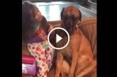 Ez a kutyus nagyon szomorúnak tűnik, de figyeld mit tesz ekkor a kislány – A nap legcukibb videója