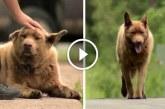 12 éve minden nap 7 kilométert sétál a kutya, hogy üdvözölje a város lakóit