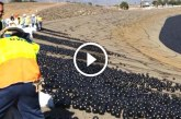 96 millió fekete labdát engedtek egy víztározóba – Nézd meg, hogy miért!