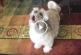 Ennél furcsább kutyaugatást még nem halottal – Ezt figyeld