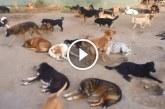 450 kutya él egy állatmenhelyen – Nézd, milyen boldogok így együtt